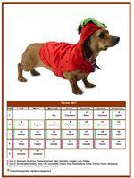 Calendrier de février 2017 de la série 'chiens'