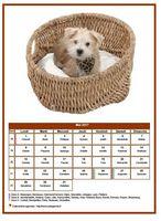 Calendrier de mai 2017 de la série 'chiens'