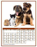 Calendrier de juin 2017 de la série 'chiens'