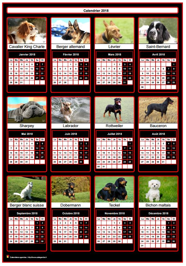 calendrier 2018 annuel 12 chiens de race. Black Bedroom Furniture Sets. Home Design Ideas