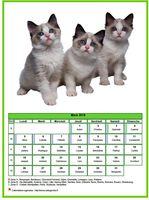 Calendrier de mars 2018 de la série 'chats'