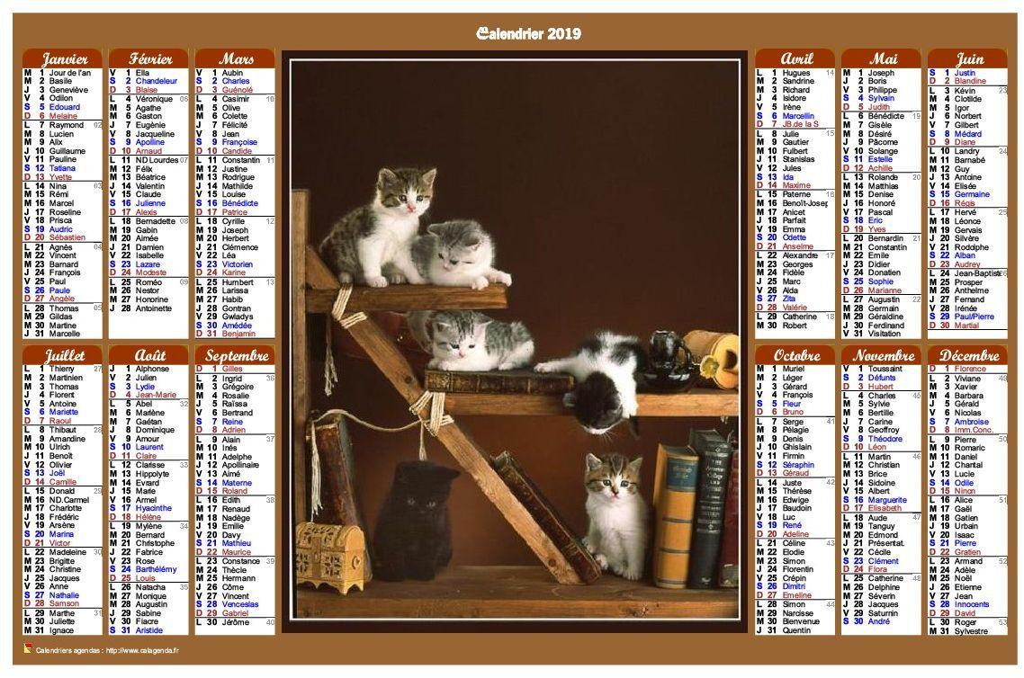 Calendrier 2019 annuel de style calendrierdes postes avec des chats