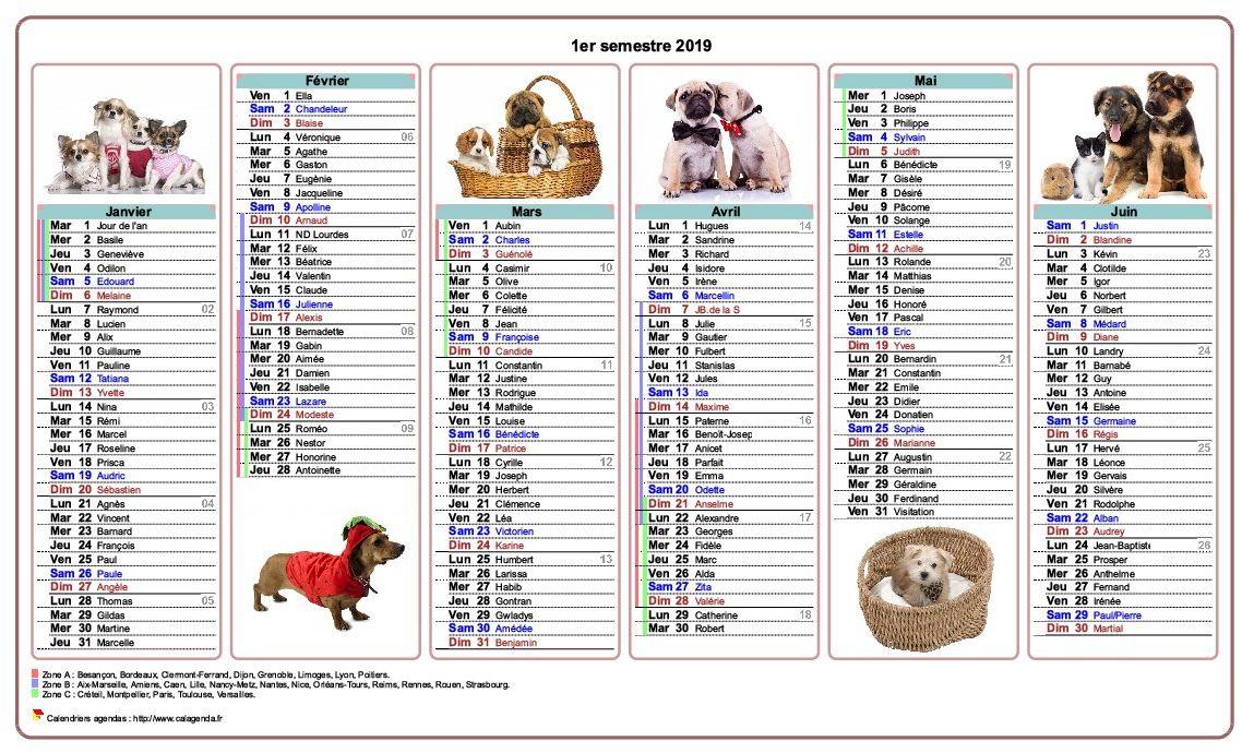Calendrier 2019 semestriel chiens