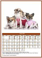Calendrier de janvier 2019 de la série 'chiens'