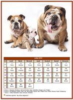 Calendrier de juillet 2019 de la série 'chiens'