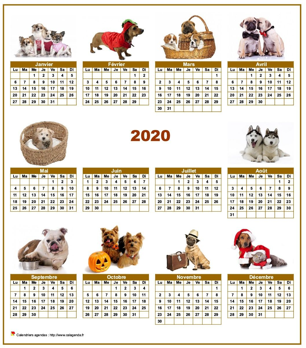 Calendrier 2020 Animaux.Calendrier 2020 Annuel Special Chiens Avec 10 Photos