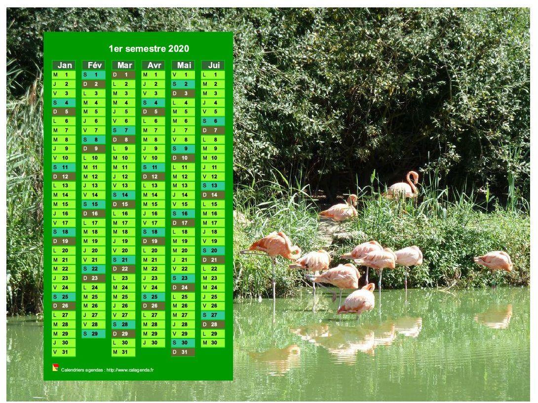 Calendrier 2020 à imprimer semestriel, format paysage, en colonne, au dessus d'une photo (flamands roses).