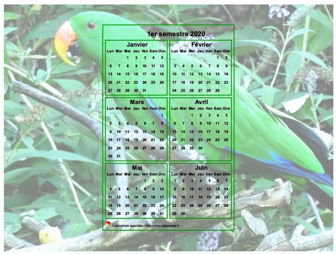 Calendrier 2020 à imprimer semestriel, format paysage, incrusté au centre d'une photo (perroquet vert).