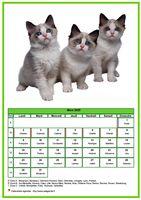 Calendrier de mars 2020 de la série 'chats'