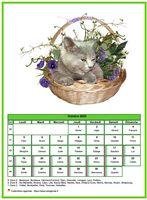 Calendrier d'octobre 2020 de la série 'chats'