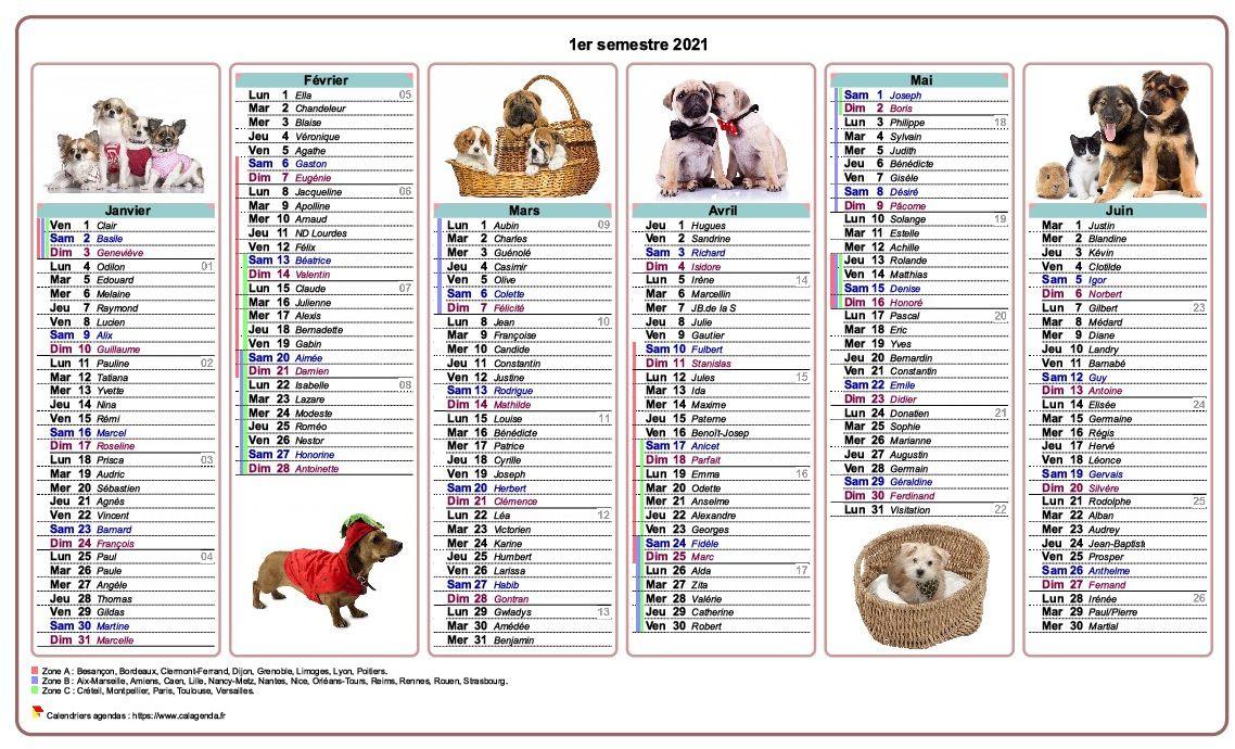 Calendrier 2021 semestriel chiens