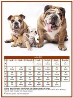 Calendrier de juillet 2021 de la série 'chiens'
