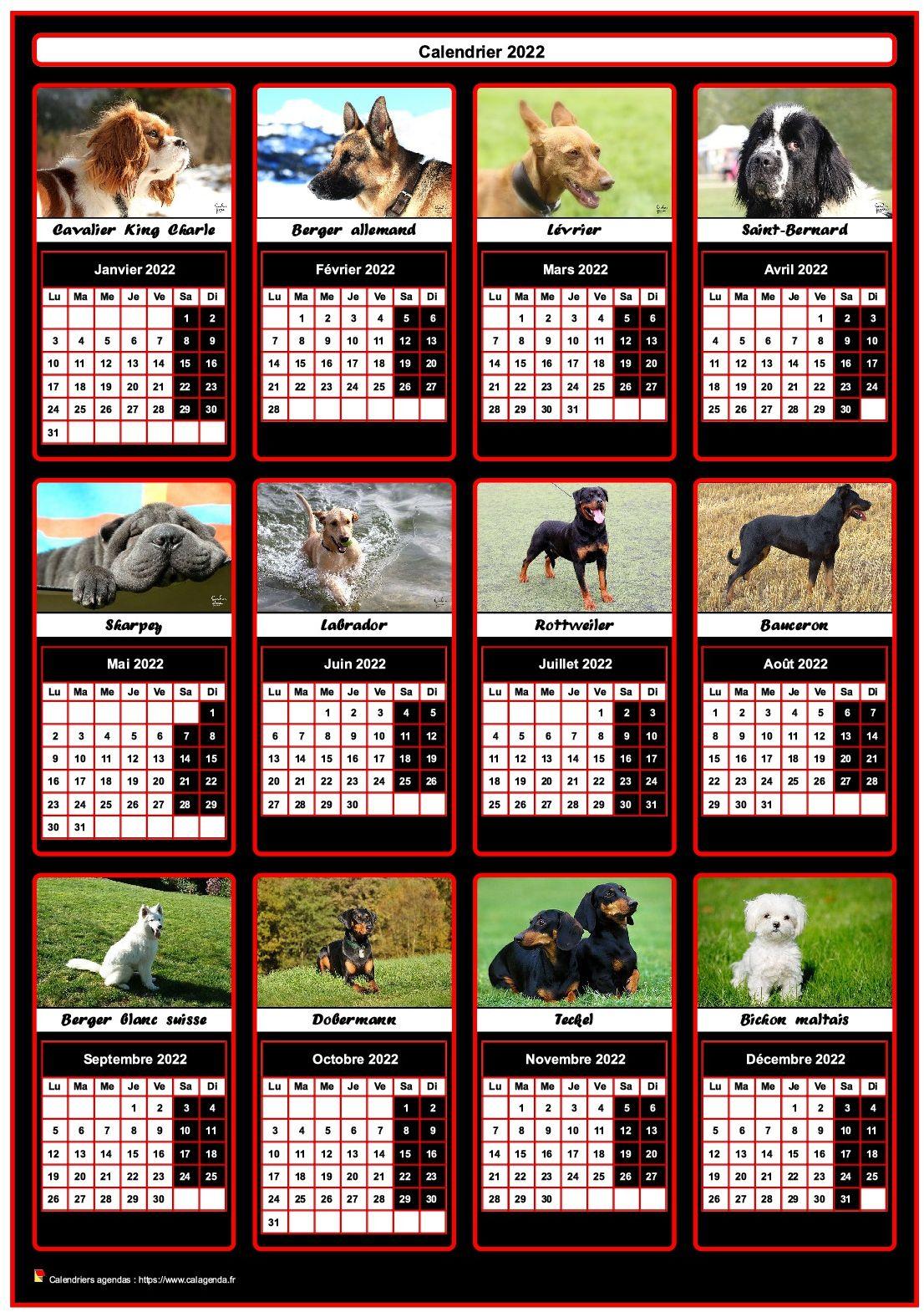Calendrier Animaux 2022 Calendrier 2022 annuel, 12 chiens de race