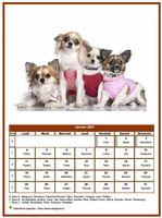 Calendrier chien du mois de janvier