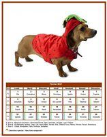 Calendrier 2013 mensuel chien