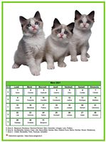 Calendrier chat du mois de mars