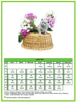 Calendrier 2013 mensuel chat