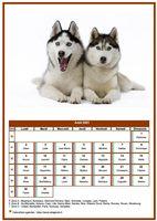 Calendrier chien du mois d'août