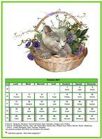 Calendrier chat du mois d'octobre