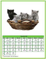 Calendrier chat du mois de novembre